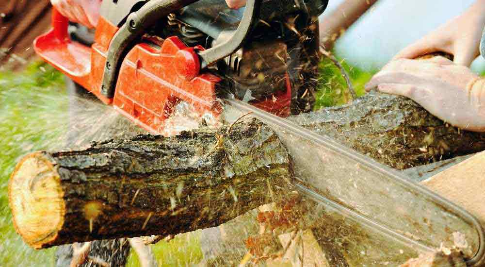 Arborist working in trees with top handle chainsaw