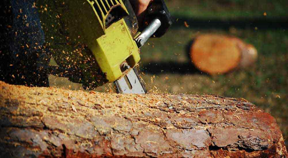 how-to-find-the-right-chainsaw