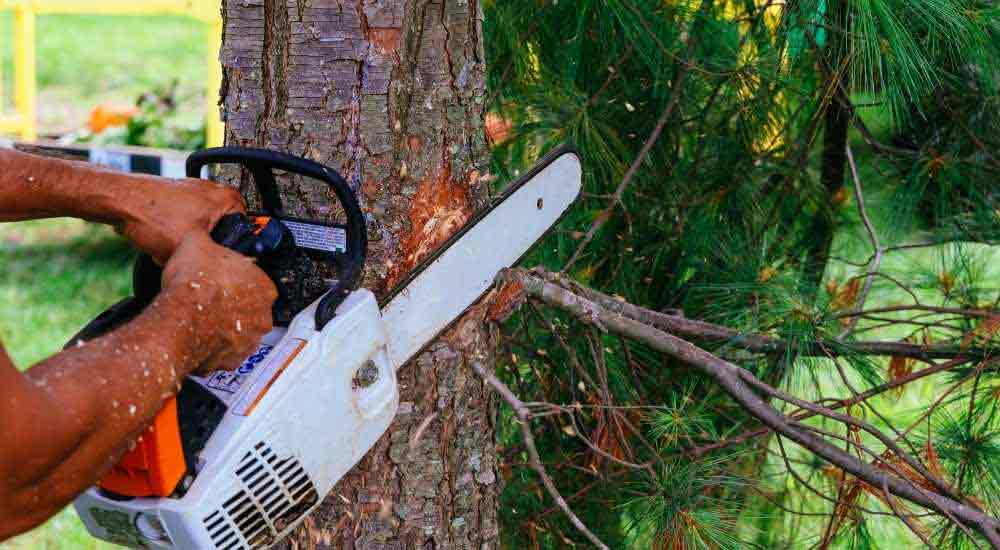 weight-grades-of-different-chainsaws