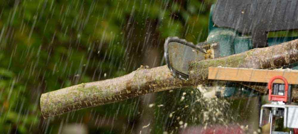 can-you-use-a-chainsaw-in-the-rain-to-cut-down-a-tree
